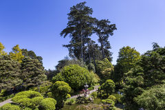 植被和树在日本庭院里 免版税库存照片