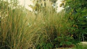 植被在一温暖的天 影视素材