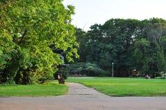 植被在公园 库存图片