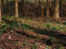 植被在巴斯克国家 免版税库存照片