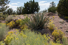 植被在新墨西哥 免版税图库摄影