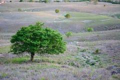 植被巴西东北半干旱照亮与日落的温暖的颜色 免版税库存照片