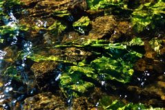 植被水 图库摄影