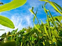 植被特写镜头射击 图库摄影