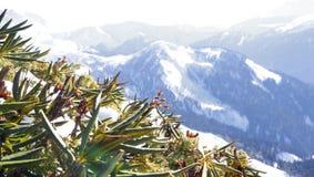 植被,从在山腰的雪下面看,以在距离的许多山为背景 库存照片
