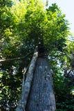 植被围拢的树 免版税库存图片