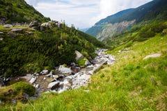 植被围拢的森林小河 免版税图库摄影