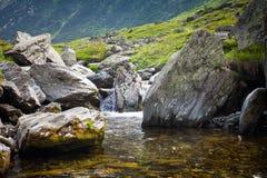植被围拢的森林小河 免版税库存照片