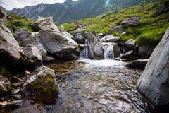 植被围拢的森林小河 库存图片