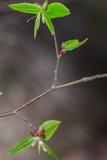植被 库存图片