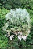 植被- Murchison下跌NP,乌干达,非洲 库存照片