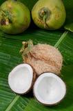椰子二halfs在绿色背景的 库存照片