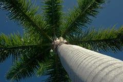 椰子冠 免版税库存图片