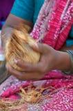 椰子剥皮 库存照片