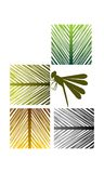 椰子叶子和蜻蜓 库存照片