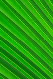 椰子叶子背景 免版税库存图片
