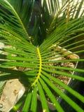 椰子叶子装饰 免版税库存照片