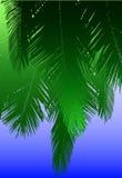 椰子叶状体 免版税库存照片
