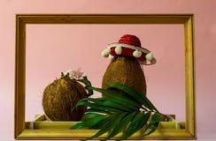 椰子和叶子创造性的布局在木制框架 在阔边帽的椰子在桃红色背景 顶视图,平的位置,拷贝空间 图库摄影