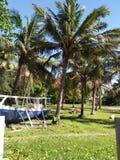 椰子和平 免版税图库摄影