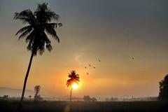 椰子和庄稼与鸟在大雾与早晨晒黑光 库存图片