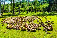 椰子和棕榈树丛清洁的在密林 免版税库存照片