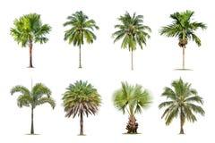 椰子和棕榈树隔绝了在白色背景的树,树的汇集 免版税库存照片