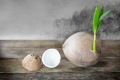 椰子和椰子磨丝器 免版税库存图片