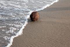 椰子和海 库存照片