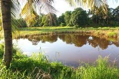 椰子和湖 免版税图库摄影