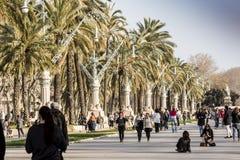 椰子在城市,巴塞罗那 免版税库存照片