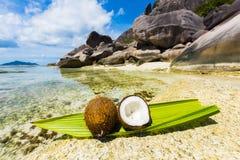 椰子在塞舌尔群岛 库存图片