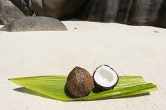 椰子在塞舌尔群岛 库存照片