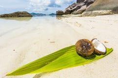 椰子在塞舌尔群岛 免版税库存照片