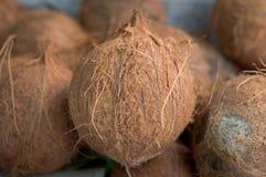 椰子在市场上的待售 小组小整个新褐色 农业背景 顶视图 特写镜头 免版税库存照片