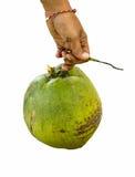 椰子在手中。 免版税图库摄影
