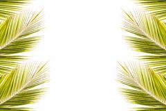 椰子在白色的叶子框架 库存照片