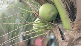 椰子在被弄脏的背景关闭视图的棕榈树增长 影视素材