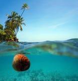 椰子在水表面和椰子树漂移 免版税库存照片