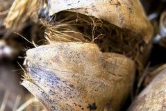 椰子坚果壳 库存图片
