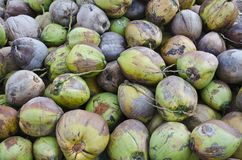椰子堆 库存图片