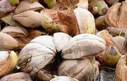 椰子壳,纹理 免版税库存照片