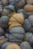 椰子壳 库存图片