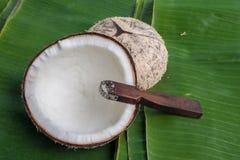 椰子壳 库存照片