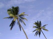 椰子天空 免版税库存照片