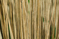 椰子干燥叶子 免版税库存照片