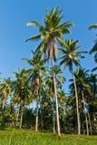 椰子庭院 库存照片