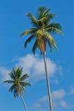 椰子庭院 免版税库存照片