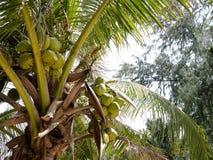 椰子庭院 免版税库存图片