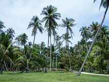 椰子庭院 库存图片